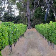 zinfandel-block-looking-south.jpg